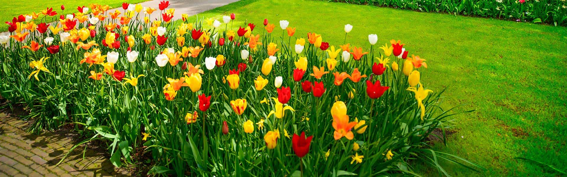 Keep your lawn green and your flowers beautiful!